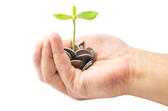 Hand Holding A Pile Of Coins And A Small Plant Sprouting From Th Royalty Free Stock Image