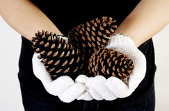 Hand holding pine cone Stock Photo