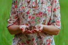 Hand holding pine cone Stock Photos