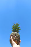Hand holding a pineapple Royalty Free Stock Photography