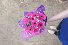 Hand holding pink flowers. Hand holding a bouquet of pink Gerbera flowers stock image
