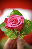 Hand holding pink rose Royalty Free Stock Photo