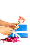 Hand holding pink rose fower Stock Images