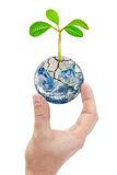 Hand holding planet earth with plants isolated on white background. Royalty Free Stock Image