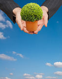 Hand holding a plant Stock Image