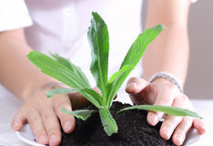 Hand holding plant Royalty Free Stock Photos