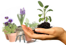 Hand Holding a Plant Royalty Free Stock Photos