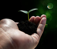 Hand holding plant on bokeh background. Ecology concept stock photography