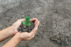 Hand holding plant. Hand holding and protect little green plant in soil over dry and crack soil because no water long time at here Royalty Free Stock Image