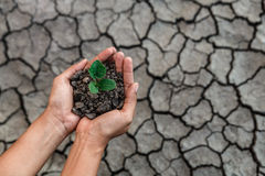 Hand holding plant. Hand holding and protect little green plant in soil over dry and crack soil because no water long time at here Royalty Free Stock Photography