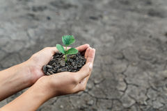 Hand holding plant. Hand holding and protect little green plant in soil over dry and crack soil because no water long time at here Royalty Free Stock Photo