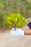 Hand holding and planting new tree Stock Images
