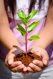 Hand holding and planting new tree Stock Photos