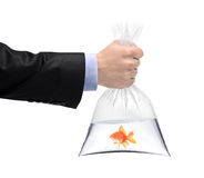 A hand holding a plastic bag with a golden fish Stock Photography