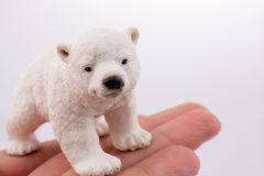 Hand holding Polar bear Stock Images