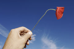 Hand holding a poppy. Against a blue sky with clouds Royalty Free Stock Photography