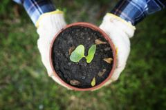 Hand holding pot of small tree Royalty Free Stock Images