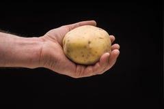 Hand holding potato isolated on black background, studio shot Royalty Free Stock Images
