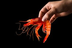 Hand holding prawn Royalty Free Stock Photography