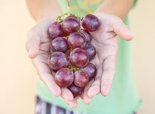 Hand Holding Red Bunch of Grapes. Hand Holding Fresh Red Bunch of Grapes stock photography