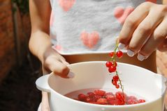 Hand holding red currants. Woman hand holding red currants above white bowl full of raspberries Stock Photo