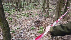 Hand holding red fencing tape. Blooming snowdrops in spring forest, a protected area, fenced with a red ribbon. Snowdrops are rare flowers recorded in the Red stock video