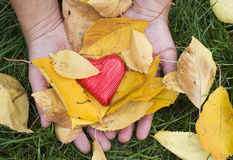 Hand holding Red heart and autumn leafs Stock Images