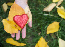 Hand holding Red heart and autumn leafs Stock Photo