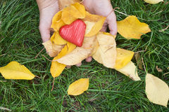 Hand holding Red heart and autumn leafs Royalty Free Stock Images