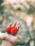 Hand holding a red heart. Valentine`s day love Stock Photo