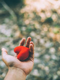 Hand holding a red heart. Valentine`s day love Royalty Free Stock Images