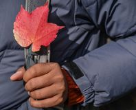 Hand holding red leaf in autumn stock photos