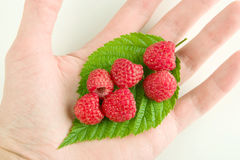 Hand holding red raspberries royalty free stock photography