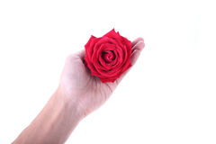 Hand holding a red rose flower isolated Royalty Free Stock Image