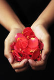 Hand holding red rose petals Stock Photography