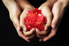 Hand holding red rose petals Stock Photos