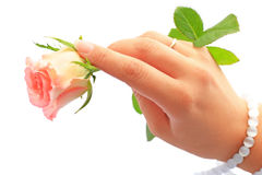 Hand holding rose Royalty Free Stock Photo