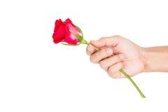 Hand holding rose flower, isolated on white background Royalty Free Stock Photos