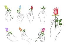 Hand Holding Rose Flowers with Green Leaves Royalty Free Stock Photo