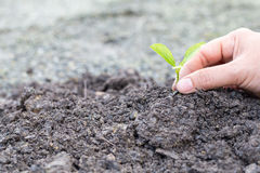 Hand holding sapling on soil Royalty Free Stock Photography