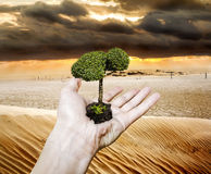 Hand holding a sapling tree amid drought in the desert Stock Image