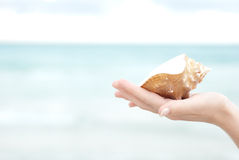 Hand holding a sea shell Stock Photos