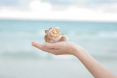 Hand holding a sea shell Royalty Free Stock Photos