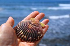 Hand holding sea shell on a blurred ocean waves background. Seashell in women`s palm against sea water with space for text. Summer,beach vacation,relax or stock photos