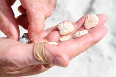 Hand holding  seashells Stock Photos