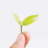 Hand holding seed plant. On background Stock Photography