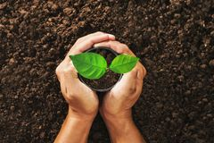 Hand holding seed tree in bag for planting Stock Image