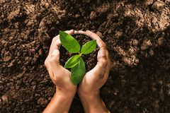 Free Hand Holding Seed Tree In Bag For Planting Royalty Free Stock Image - 103925356