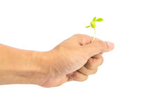 Hand holding seeding Royalty Free Stock Photography