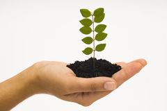 Hand holding seedling Royalty Free Stock Photography